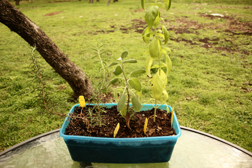 Nadia's Herb Garden