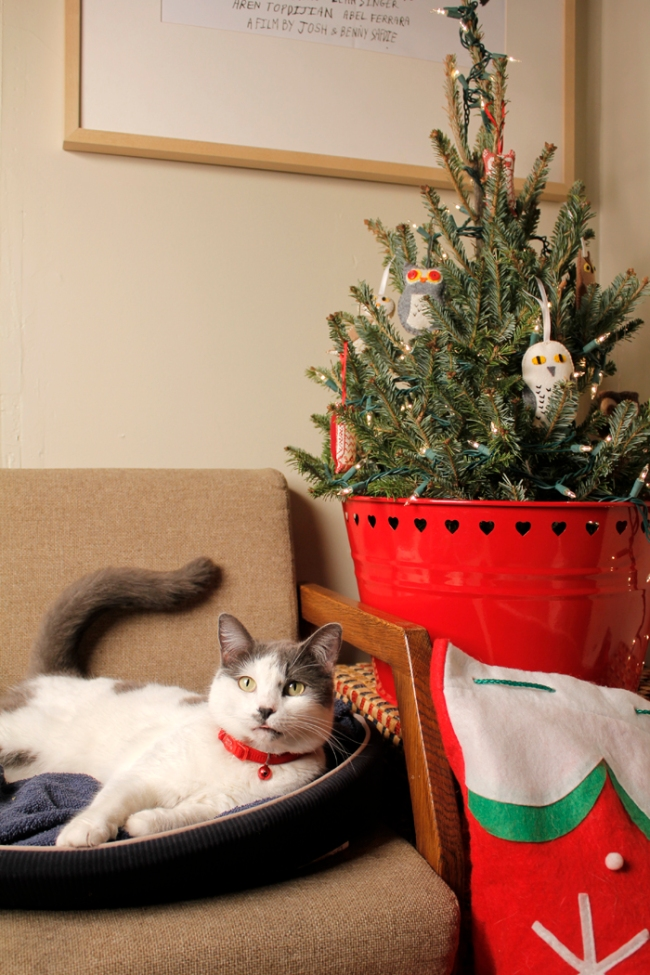 Lola Christmas #veggieangie